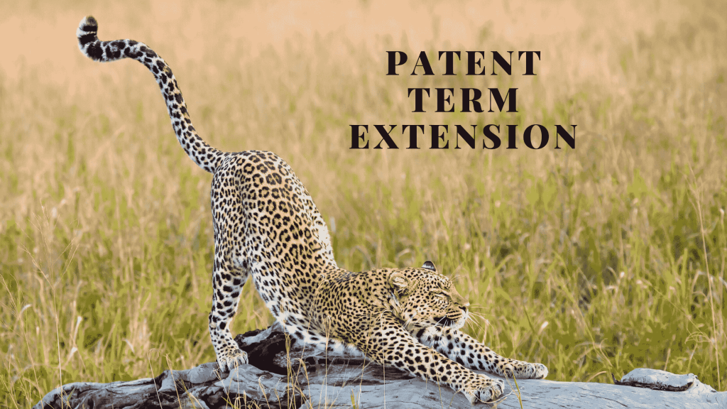 patent term extension Israel